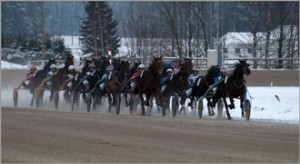 Snowy Harness Race