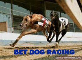 Bet Dog Racing